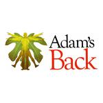 Adam's Back - Chiropractic