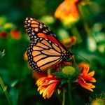 Medical Intuitive Naturopathy & Hypnotherapy