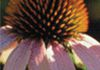 Knox Integrative Health - Naturopathy