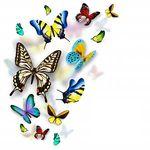 Radiant Heart Healing - Kinesiology