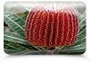 Banksia Women's Healing Centre - Flower Essences