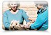 Animal Equilibrium - Animal Therapies
