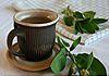 Taste 4 Health - Wellbeing Services