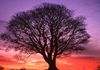 Counselling - Natures Wellness Centre