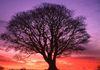 Spiritual Services - Natures Wellness Centre