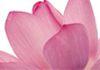 Sheena's Healing Hands - Aromatherapy