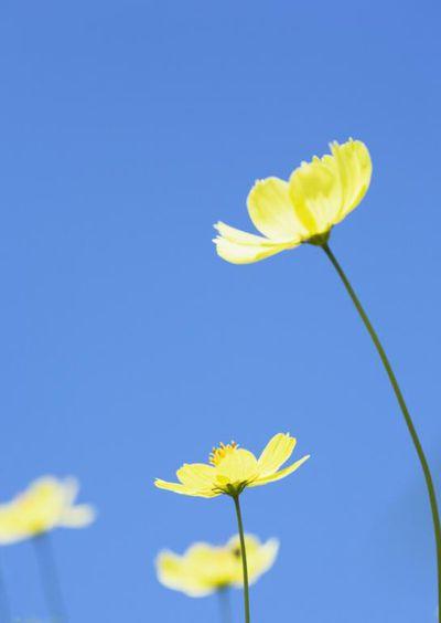 yellow flower blue sky
