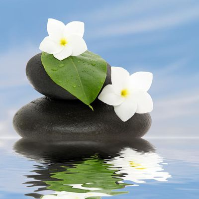 stone on water with white flowers