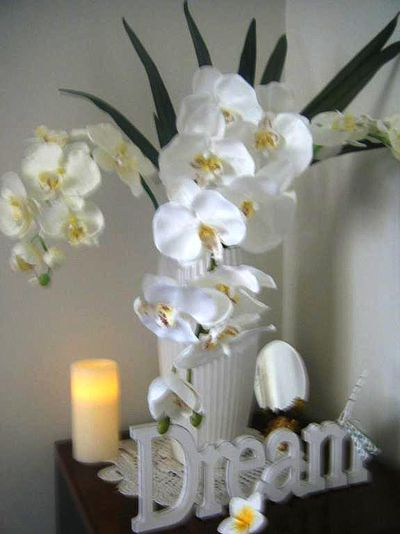 affirmation dream orchid backdrop